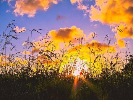 sunset through tall grass Stock Photo
