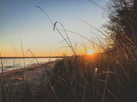 sunset through the grass on the beach