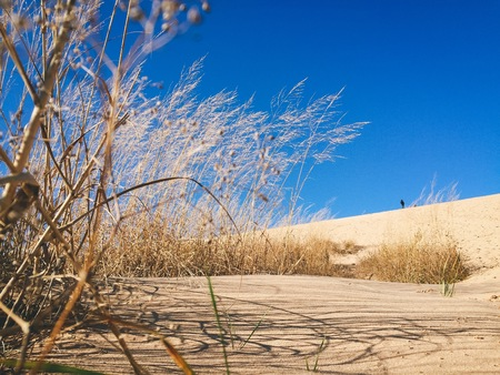 tall grass and sand at sleeping bear dunes