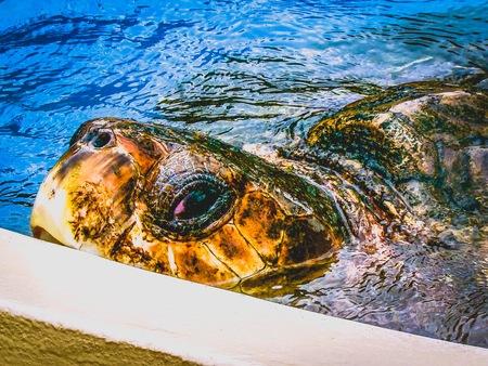 Turtle playing peek-a-boo