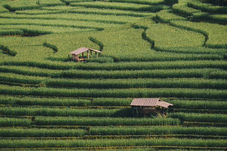 Huts in the green rice fields in terrace.