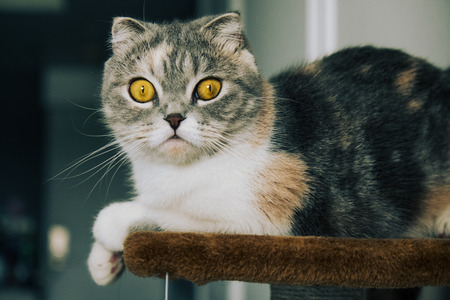 Grey cat with stripes