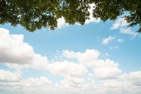 Beautiful blue sky and clouds with branches