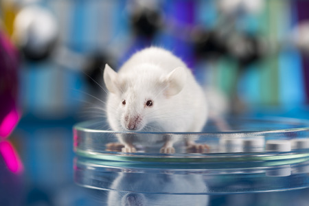 rat: Workplace modern laboratory for molecular biology test on blue