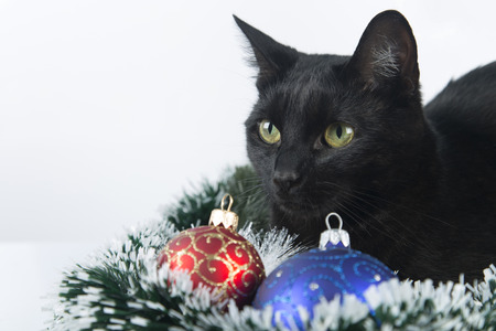 beautiful black cat lies on the christmas ornaments decorations stock photo 69240041 - Black Cat Christmas Ornament