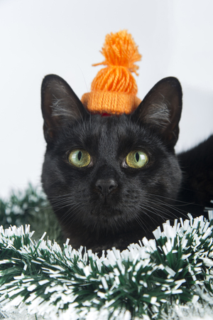 Beautiful black cat lies on the Christmas ornaments, decorations Zdjęcie Seryjne - 69240039