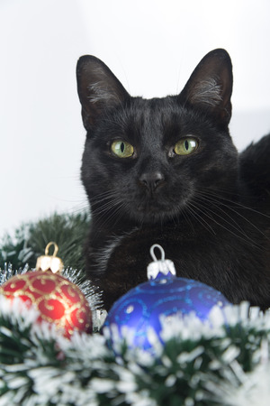 beautiful black cat lies on the christmas ornaments decorations stock photo 69217805 - Black Cat Christmas Ornament