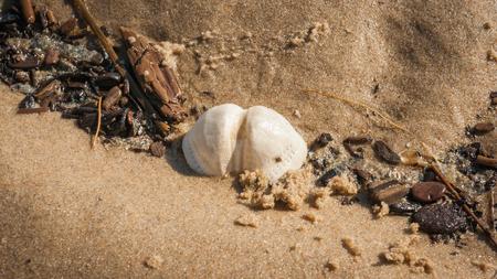 Sea urchin test found on the flood line at the North Sea beach Standard-Bild - 105679961