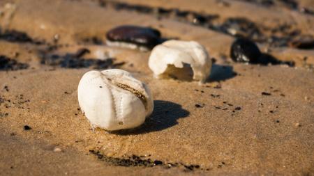 Seeigeltests in Perspektive am Northsea Beach