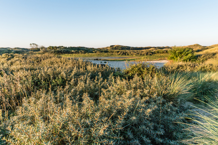 Dune valley and little lake in morning light. North Holland Dunes Reserve, Egmond aan Zee, the Netherlands Stock Photo