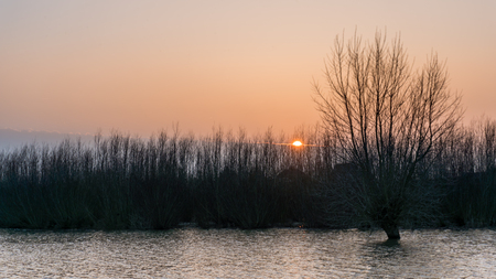 Hardinxveld,  knotted willow and coppices in flooded river forelands at sunset Stok Fotoğraf
