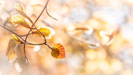 Beech leaves spring fantasy background Stock Photo