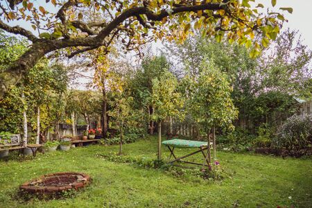View on the autumn garden from under the pear tree
