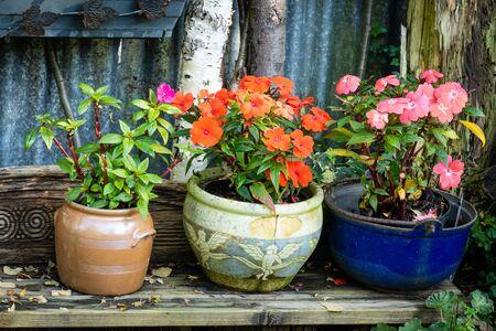 Terracotta earthen flower pots with busy Lissie