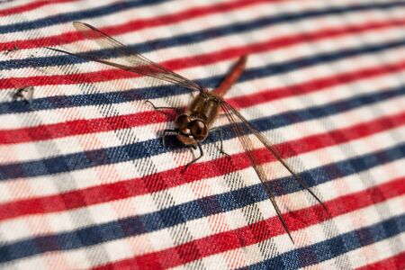 Dragon fly on red and blue checkered textile
