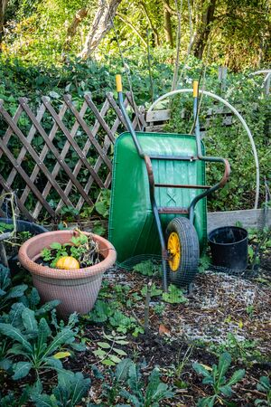 Scenery of vegetable garden with wheelbarrow