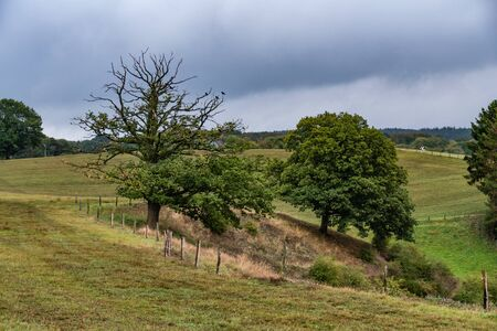 Countryside landscape with trees and meadowsRolling landscape with trees and birds in the tree tops of an old oak, near the historic citycentre of Old-Breinig. Breinig-Stolberg (Rheinland), Noordrijn-Westfalen. Germany