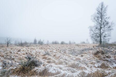 Witches broom birch in snowy High Fens landscape Standard-Bild