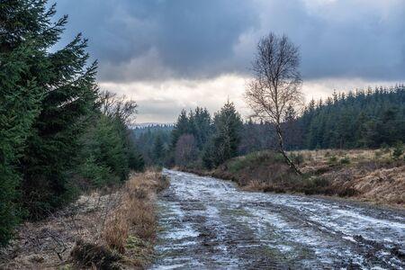 Mud path through the High Fens Woods HDR