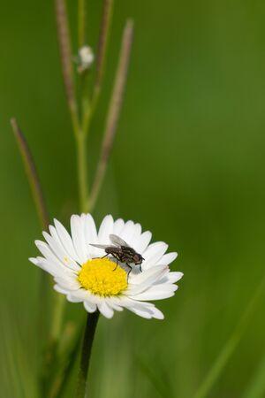 Spring in my dad's garden. Burst, Erpe-Mere, Belgium. Stock Photo