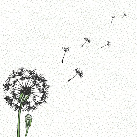 Pissenlit de vecteur, dessin à la main. Flying blow pissenlit bourgeons décoration extérieure noire sur un fond moucheté. Fleurs graphiques vectoriels Vecteurs