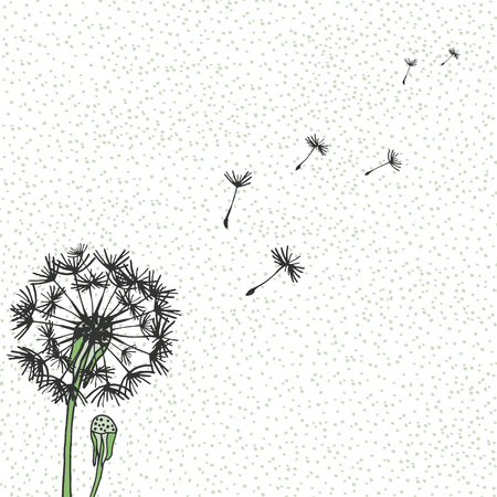 Vector Dandelion, hand drawing. Flying blow dandelion buds black outdoor decoration on a background speckled. Vector graphic flowers Vector Illustration
