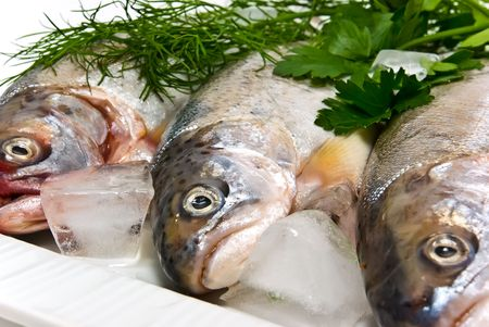 Fresh trout for a tasty dish photo