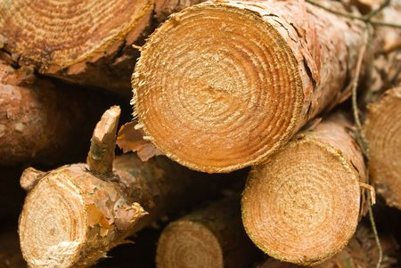 timber cutting: Logs from a pine on timber cutting