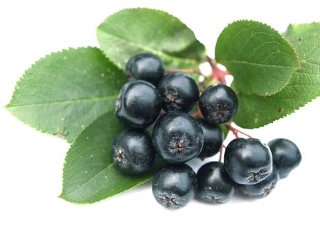 Black chokeberry (aronia) - well known for its many health benefits.