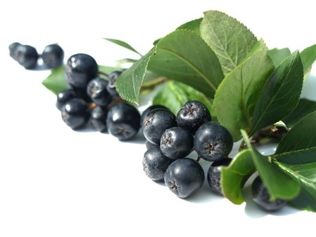 Black chokeberry (aronia) - well known for its many health benefits