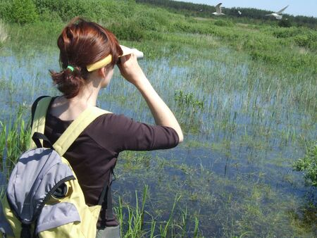 birdwatching on the swamp Stock Photo