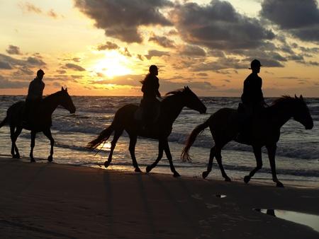 horseback: sunset ride - Baltic sea