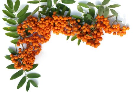 A decorative border with rowan berries Stock Photo