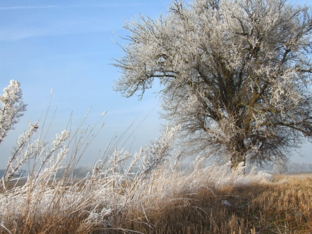 icey: Meadow on a sunny freezing day Stock Photo