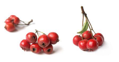 crata�gus: Espino blanco (Crataegus)