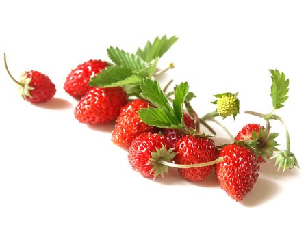Woodland Strawberry Fragaria vesca