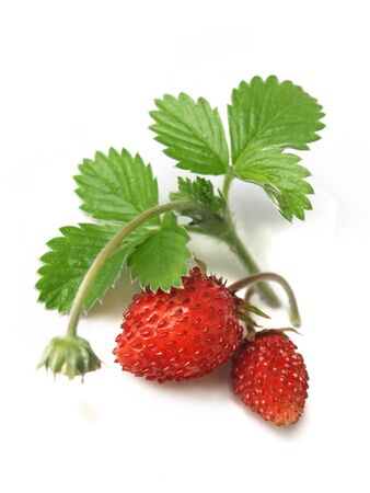 fragaria: Woodland Strawberry Fragaria vesca