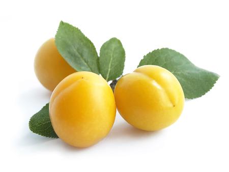 Mirabelle plum Prunus domestica