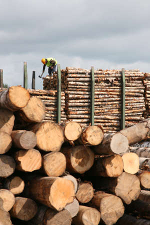 The man works on the top of a cup in warehouse of logs