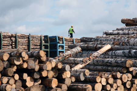 The man goes on the top of a cup in warehouse of logs Standard-Bild