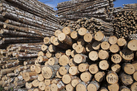 The storage of logs. Ready to transportation to the plant Standard-Bild