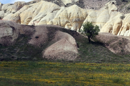 Tree, which grows on the volcanic mountains in Cappadocia, Turkey