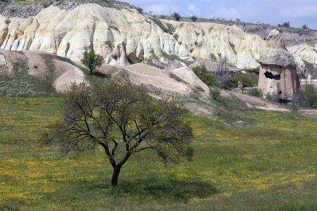 Baum, der auf den vulkanischen Bergen w?st in Kappadokien, T?i Standard-Bild - 19547982