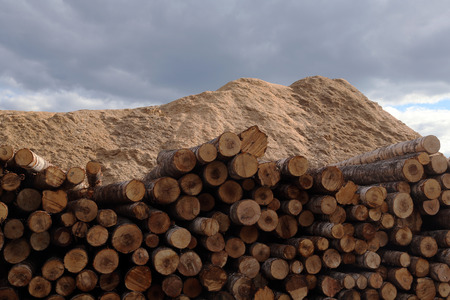 The warehouse of logs in open air Standard-Bild