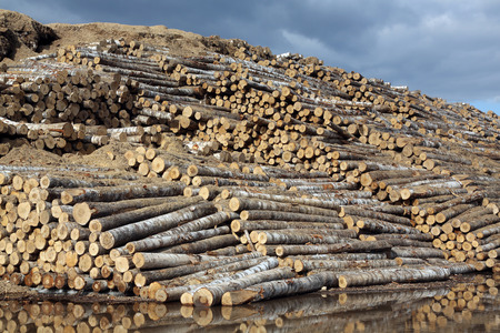 The warehouse of logs in open air Stock fotó