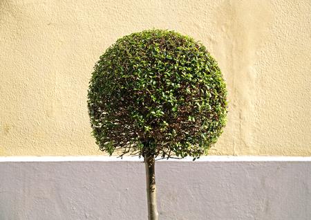 bush trimming: tree round Stock Photo