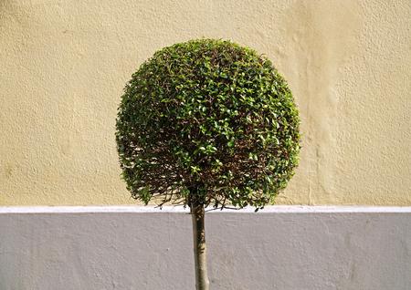 round: tree round Stock Photo