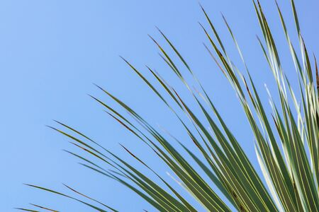 Leaves frame of coconut branches with cloudy blue sky background.
