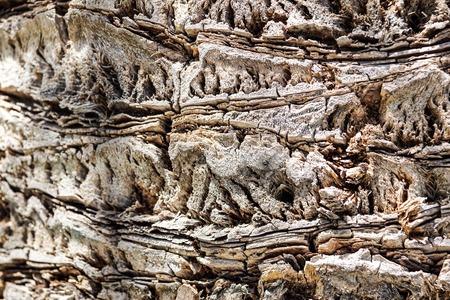 Huge oak bark as background, close up Stock Photo