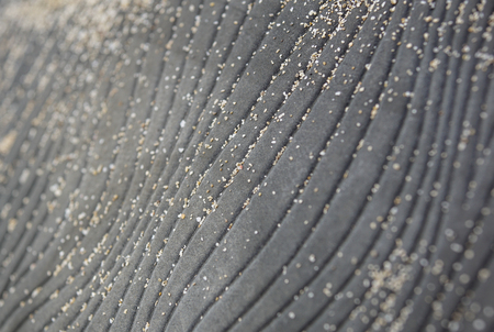 abstract rubber texture with grains of sand